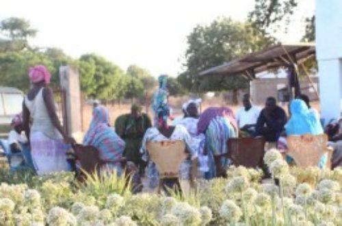Article : Sénégal: Si vous voulez manger bio et local, partez à Nguindor
